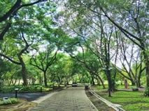 Δενδρώδης διάβαση πεζών στο πάρκο στοκ φωτογραφία με δικαίωμα ελεύθερης χρήσης