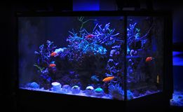 Δεξαμενή ενυδρείων κοραλλιογενών υφάλων Στοκ φωτογραφία με δικαίωμα ελεύθερης χρήσης