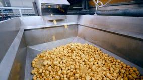 Δεξαμενή εργοστασίων με τις πατάτες που περιέρχονται σε το φιλμ μικρού μήκους
