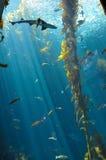 Δεξαμενή καρχαριών Στοκ φωτογραφία με δικαίωμα ελεύθερης χρήσης