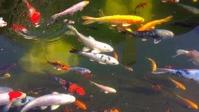 Δεξαμενή με τους διάφορους τύπους ψαριών απόθεμα βίντεο