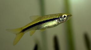δεξαμενή μολυβιών ψαριών &epsilo στοκ φωτογραφίες