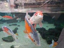 Δεξαμενή ψαριών στη βροχή Γερμανία στοκ φωτογραφία