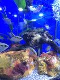Δεξαμενή ψαριών Στοκ εικόνα με δικαίωμα ελεύθερης χρήσης