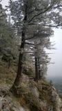 Δευτερεύοντα δέντρα σηράγγων απότομων βράχων Στοκ Εικόνες