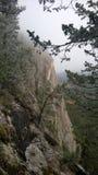 Δευτερεύοντα δέντρα σηράγγων απότομων βράχων Στοκ φωτογραφία με δικαίωμα ελεύθερης χρήσης