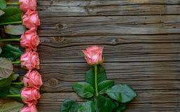 Δευτερεύοντα σύνορα των όμορφων φρέσκων ρόδινων τριαντάφυλλων Στοκ Φωτογραφία