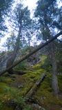 Δευτερεύον ίχνος βουνών σηράγγων banff Στοκ Εικόνες