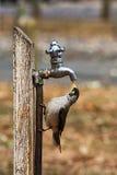 Δευτερεύον πουλί Στοκ φωτογραφία με δικαίωμα ελεύθερης χρήσης