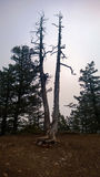 Δευτερεύουσα σήραγγα δύο απότομων βράχων δέντρα Στοκ φωτογραφία με δικαίωμα ελεύθερης χρήσης
