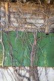 δευτερεύων τοίχος αμπέλων Στοκ εικόνα με δικαίωμα ελεύθερης χρήσης