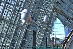 Δελφίνια μέσα στη Συνθήκη και το συνεδριακό κέντρο παραλιών της Βιρτζίνια στοκ εικόνες