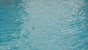 Δελφίνια που κολυμπούν κάτω από το νερό απόθεμα βίντεο