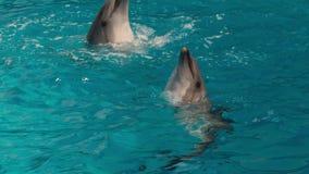 Δελφίνια που περιβάλλουν στο νερό φιλμ μικρού μήκους