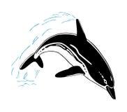 Δελφίνι άλματος που απομονώνεται στο άσπρο υπόβαθρο Στοκ Φωτογραφία