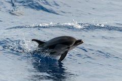 Δελφίνι πηδώντας στη βαθιά μπλε θάλασσα Στοκ φωτογραφία με δικαίωμα ελεύθερης χρήσης