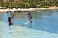Δελφίνι στο ξενοδοχείο Atlantis Στοκ εικόνα με δικαίωμα ελεύθερης χρήσης