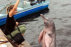Δελφίνι του Αμαζονίου Στοκ Φωτογραφία