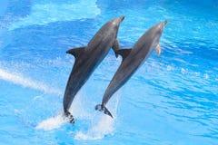 Δελφίνι Bottlenose Στοκ Φωτογραφία