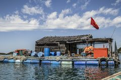 Δηλητήριο που καλλιεργεί στη θάλασσα κοντά Nam du Island στοκ εικόνες