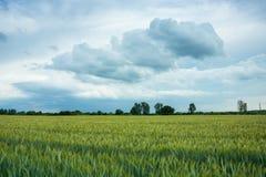 Δημητριακά και σύννεφα στον ουρανό στοκ εικόνες