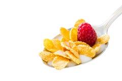 Δημητριακά στο κουτάλι στοκ εικόνα