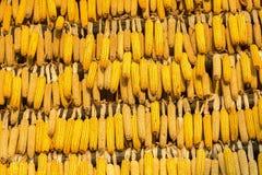 Δημητριακά το φθινόπωρο στοκ φωτογραφίες