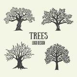 Δημιουργική σκιαγραφία δέντρων ελιών, argan και καφέ επίσης corel σύρετε το διάνυσμα απεικόνισης Στοκ Εικόνες