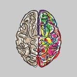 Δημιουργικός εγκέφαλος με το διάνυσμα κτυπημάτων χρώματος απεικόνιση αποθεμάτων