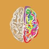Δημιουργικός εγκέφαλος με το διάνυσμα κτυπημάτων χρώματος ελεύθερη απεικόνιση δικαιώματος