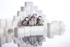 Δημιουργικός πυροβολισμός των κύβων ζάχαρης και penguins στοκ φωτογραφία με δικαίωμα ελεύθερης χρήσης