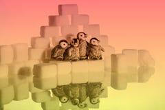 Δημιουργικός πυροβολισμός των κύβων ζάχαρης και penguins στοκ εικόνα με δικαίωμα ελεύθερης χρήσης
