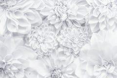 Δημιουργικό άσπρο σχεδιάγραμμα λουλουδιών, floral σχέδιο ή υπόβαθρο για τη ευχετήρια κάρτα της ημέρας μητέρων, γενέθλια, ημέρα βα Στοκ Εικόνα