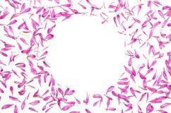 Δημιουργικό ελάχιστο υπόβαθρο λουλουδιών Ρόδινο πλαίσιο λουλουδιών στο λευκό Στοκ Εικόνα