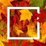 Δημιουργικό σχεδιάγραμμα φιαγμένο από ζωηρόχρωμα φύλλα πτώσης φθινοπώρου με το άσπρο πλαίσιο Στοκ Εικόνα