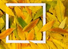 Δημιουργικό σχεδιάγραμμα φιαγμένο από ζωηρόχρωμα φύλλα πτώσης φθινοπώρου με το άσπρο πλαίσιο Στοκ Εικόνες