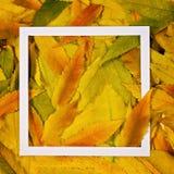 Δημιουργικό σχεδιάγραμμα φιαγμένο από ζωηρόχρωμα φύλλα πτώσης φθινοπώρου με το άσπρο πλαίσιο Στοκ εικόνα με δικαίωμα ελεύθερης χρήσης