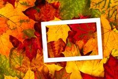 Δημιουργικό σχεδιάγραμμα φιαγμένο από ζωηρόχρωμα φύλλα πτώσης φθινοπώρου με το άσπρο κενό πλαίσιο Στοκ Εικόνα