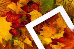 Δημιουργικό σχεδιάγραμμα φιαγμένο από ζωηρόχρωμα φύλλα πτώσης φθινοπώρου με το άσπρο πλαίσιο Στοκ φωτογραφία με δικαίωμα ελεύθερης χρήσης