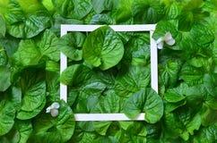 Δημιουργικό σχεδιάγραμμα φιαγμένο από φύλλα με το πλαίσιο εγγράφου Επίπεδος βάλτε απομονωμένο έννοια λευκό φύσης στοκ φωτογραφία με δικαίωμα ελεύθερης χρήσης