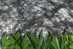 Δημιουργικό υπόβαθρο φιαγμένο από έγγραφο στο χρώμα και τα πράσινα φύλλα Στοκ Εικόνες