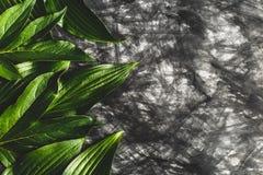 Δημιουργικό υπόβαθρο φιαγμένο από έγγραφο στο χρώμα και τα πράσινα φύλλα Στοκ Φωτογραφία