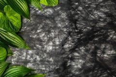 Δημιουργικό υπόβαθρο φιαγμένο από έγγραφο στο χρώμα και τα πράσινα φύλλα Στοκ φωτογραφία με δικαίωμα ελεύθερης χρήσης