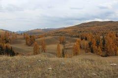 Δημοκρατία Altai Στοκ εικόνες με δικαίωμα ελεύθερης χρήσης
