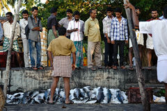 Δημοπρασία ψαριών σε Kochi, νότια Ινδία Στοκ Εικόνες