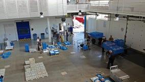 Δημοπρασία Blanes, Ισπανία ψαριών Εμπορευματοκιβώτια στο μεταφορέα φιλμ μικρού μήκους