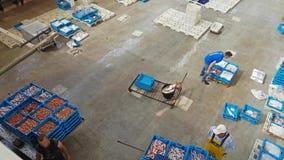 Δημοπρασία Blanes, Ισπανία ψαριών Εμπορευματοκιβώτια στο μεταφορέα απόθεμα βίντεο