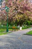 Δημόσιος κήπος με τα ανθίζοντας δέντρα Στοκ εικόνα με δικαίωμα ελεύθερης χρήσης