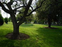 Δημόσιος κήπος της Βοστώνης, Βοστώνη, Μασαχουσέτη, ΗΠΑ στοκ φωτογραφία με δικαίωμα ελεύθερης χρήσης