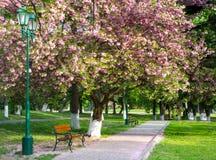 Δημόσιος κήπος Στοκ Εικόνα